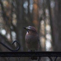 Осенняя птица :: Aнна Зарубина
