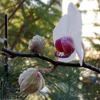 Орхидея ... :: Aleks Ben Israel