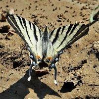 Бабочки летают, бабочки... 1 :: Swetlana V
