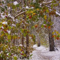 Первый снег---22 :: Владимир Холодный
