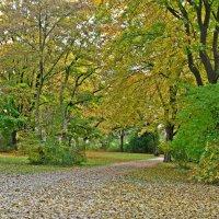 """""""...Листьям падать – так хорошо  Под ласкающим солнца светом..."""" :: Galina Dzubina"""