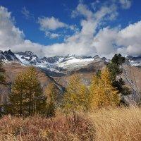 лиственницы и осень :: Elena Wymann