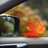 За окном осень. :: Юрий