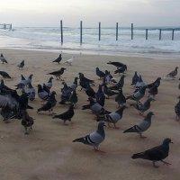 Морские прогулки. :: Natali Lubich