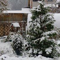Сегодня выпал первый снег :: Светлана