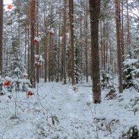 Первый снег :: Павлова Татьяна Павлова