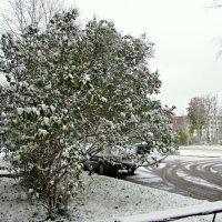 Первый снег :: veera (veerra)