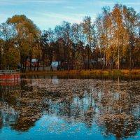 Осенние краски... :: Галина Кучерина