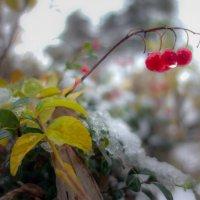 в первый снег :: Аркадий Алямовский
