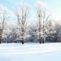 зима :: оксана