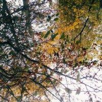 Янодная осень :: Ангелина Соловьева