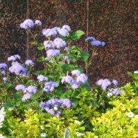 Осенние цветы... :: Тамара (st.tamara)