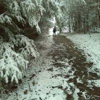 свежо в лесу :: Вася Попкин