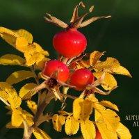 Осень... :: Swetlana V
