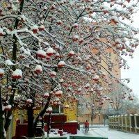 сегодня выпал первый снег :: Александр Прокудин