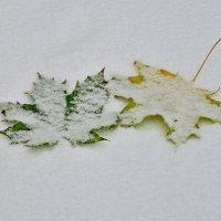 Первый снег.. :: Юрий Анипов