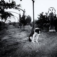 грусть собачья :: Maksim Dubinsky