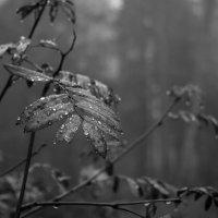 Осенний этюд 3 :: Алексей Цирятьев