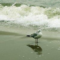 Чайка и Балтийская волна. :: Elena N