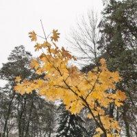листья жёлтые... :: Владимир Зырянов