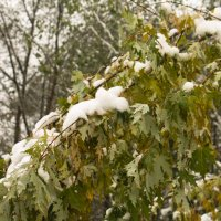 первый снег :: Владимир Зырянов
