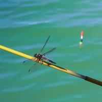 На рыбалке :: Алла Рыженко