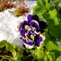 Последний цветок :: Дмитрий Ерохин