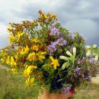 ...Ты глянь ,в глазах цветов застыл восторг немой !!! ВАМ ! :: Мила Бовкун