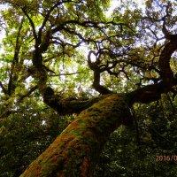 дерево :: Таня