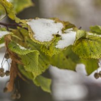первый снег в Москве :: Лариса Батурова