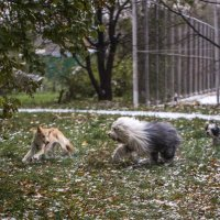 утреннте побегушки :: Лариса Батурова