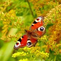 живой цветок в золотарнике :: Александр Прокудин