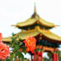 Розы :: Полина Polli