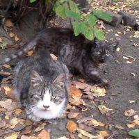 Кошечки на прогулке :: Svetlana Lyaxovich