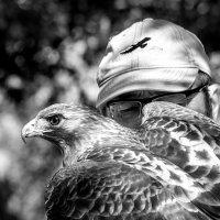 Ястребиная охота :: Viacheslav