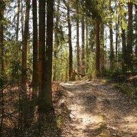 лесной дорогой :: оксана