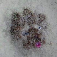По первому снегу :: Елена Миронова