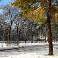 ранняя зима :: Alla Swan