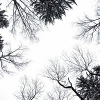 Зимняя пора :: Дарья Семенова
