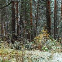 А впереди ноябрь и скука... :: Лесо-Вед (Баранов)