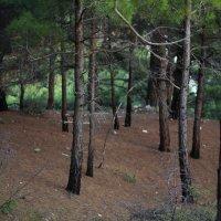 Волшебный лес Геленджика :: Андрей Борисов