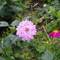 Цветов всё меньше во дворах... :: Маргарита Батырева