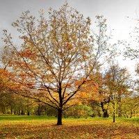Солнечное дерево :: Юрий Кольцов
