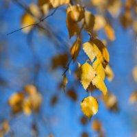 Осень в парке :: Юлия Филировска