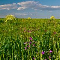 Травы луговые :: Александр Березуцкий (nevant60)
