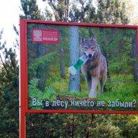 Придёт лесной  друг! :: Андрей Буховецкий
