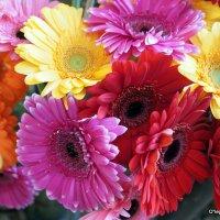 цветочные истории-в дом :: Олег Лукьянов