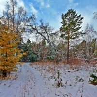 Осенне-зимний пейзаж :: Анатолий Иргл