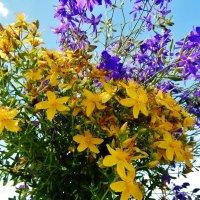 Жёлтые и голубые цветы :: Валентина Пирогова