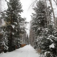 вот и зима стоит у порога :: Татьяна